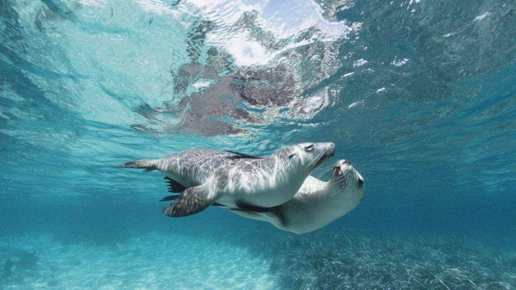 Wildlife Film Festival_Sea Lions – Life by a Whisker